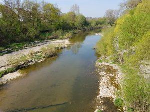 Der alte Neckar bei Freiberg
