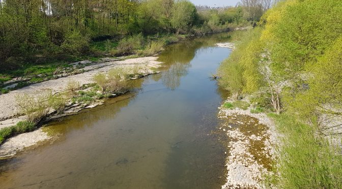 Die Neckar-Auen