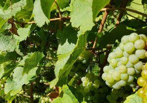 Herbstzeit Weinzeit